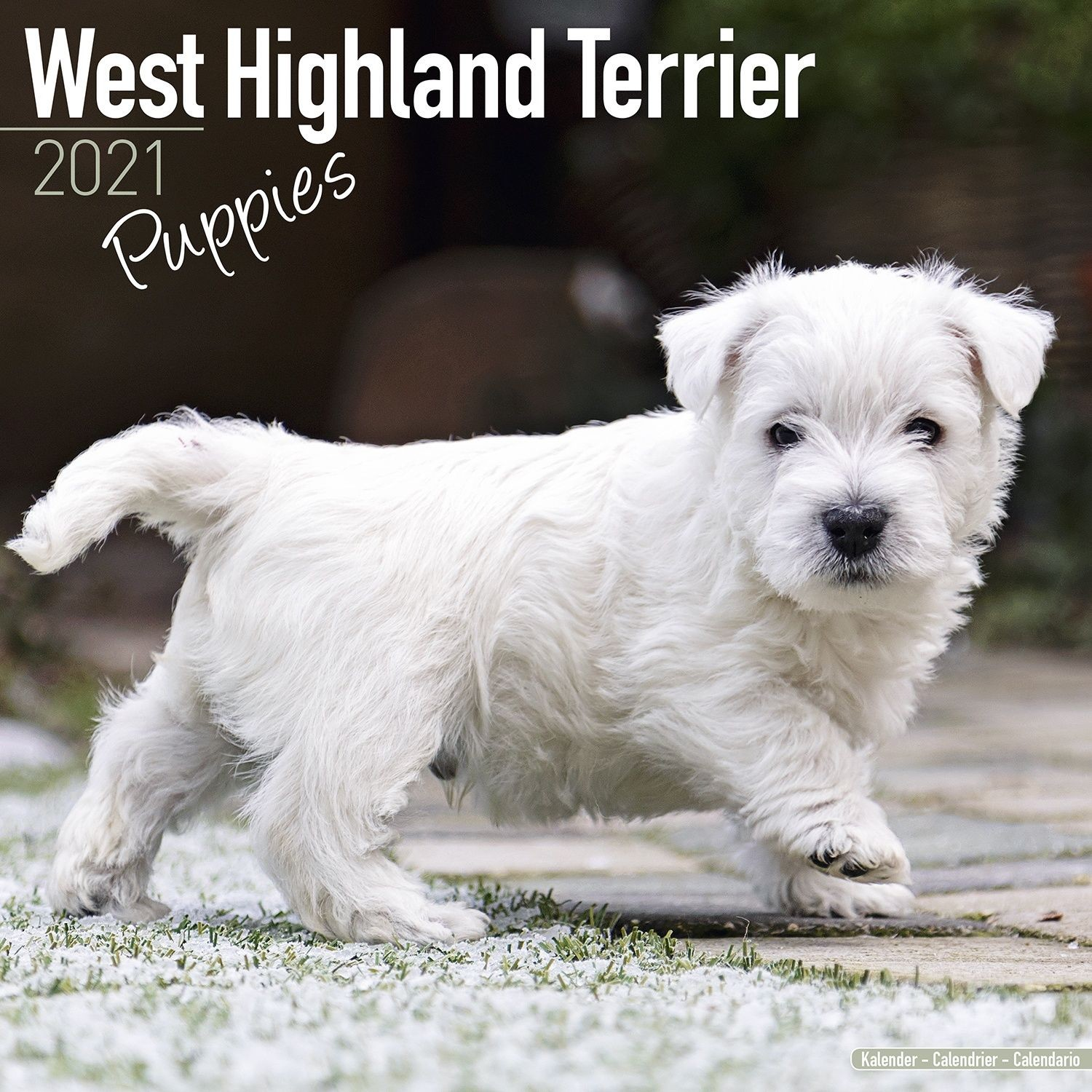 West Highland Terrier Puppies Wall Calendar 2021 by Avonside