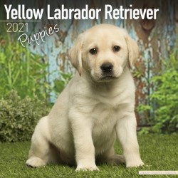 Labrador Retriever (Yellow) Puppies Wall Calendar 2021 by Avonside
