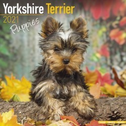 Yorkshire Terrier Puppies Wall Calendar 2021 by Avonside