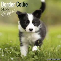 Border Collie Puppies Wall Calendar 2022