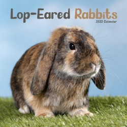 Lop-Eared Rabbits Wall Calendar 2022