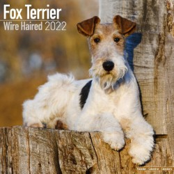 Fox Terrier (Wirehaired) Wall Calendar 2022