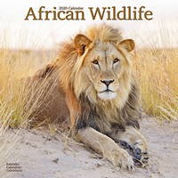 African Wildlife Wall Calendar 2020