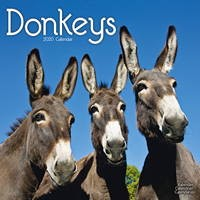 Donkeys Wall Calendar 2020