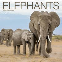 Elephants Wall Calendar 2020