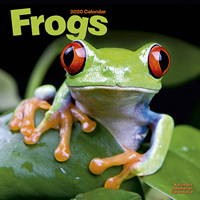 Frogs Wall Calendar 2020