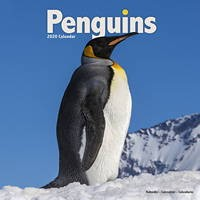 Penguins Wall Calendar 2020