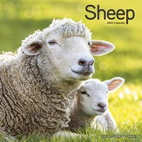 Sheep Wall Calendar 2020