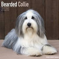 Bearded Collie Wall Calendar 2020