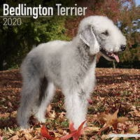 Bedlington Terrier Wall Calendar 2020