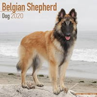 Belgian Shepherd Dog Wall Calendar 2020