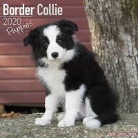 Border Collie Puppies Wall Calendar 2020