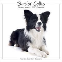 Border Collie Studio Range Wall Calendar 2020