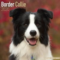 Border Collie Wall Calendar 2020