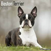 Boston Terrier Wall Calendar 2020