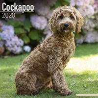 Cockapoo Wall Calendar 2020