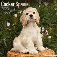 Cocker Spaniel Puppies Wall Calendar 2020