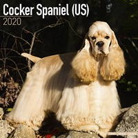 Cocker Spaniel (Us) Wall Calendar 2020