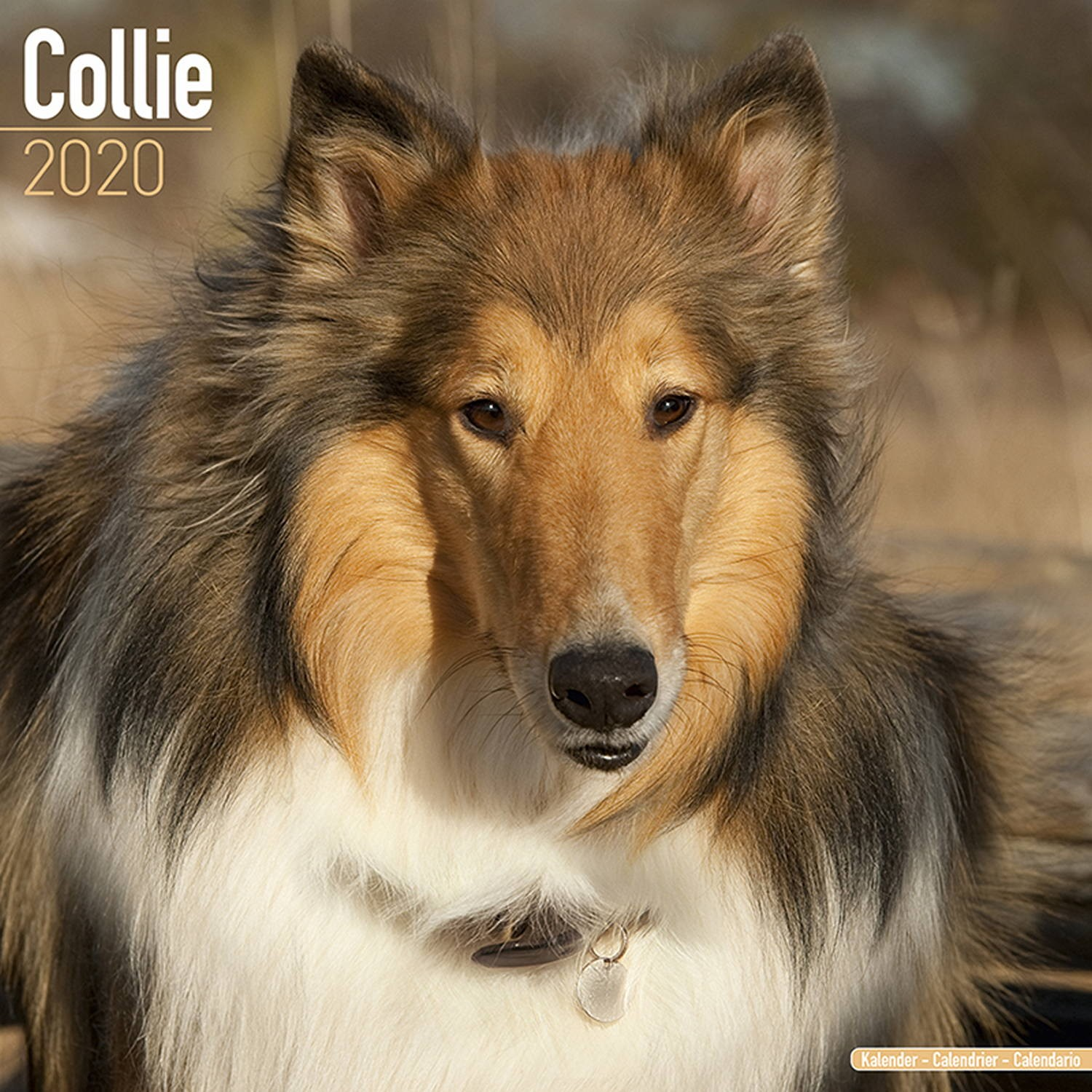 Collie Wall Calendar 2020