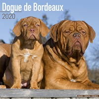 Dogue De Bordeaux Wall Calendar 2020