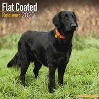 Flatcoated Retriever Wall Calendar 2020