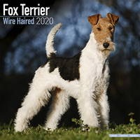 Fox Terrier (Wirehaired) Wall Calendar 2020