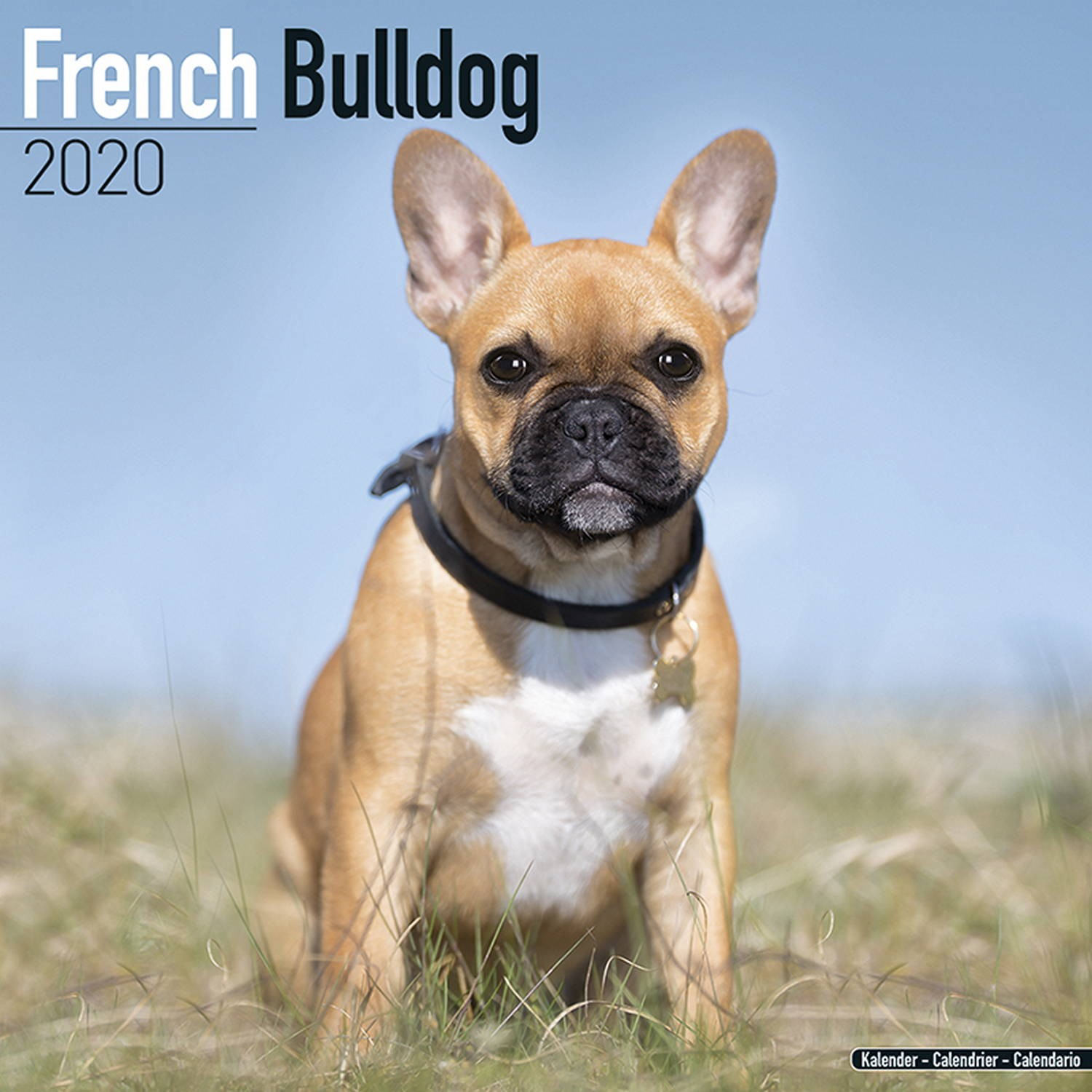 French Bulldog Wall Calendar 2020