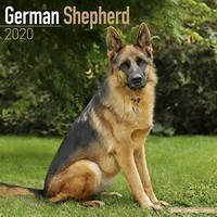 German Shepherd Wall Calendar 2020