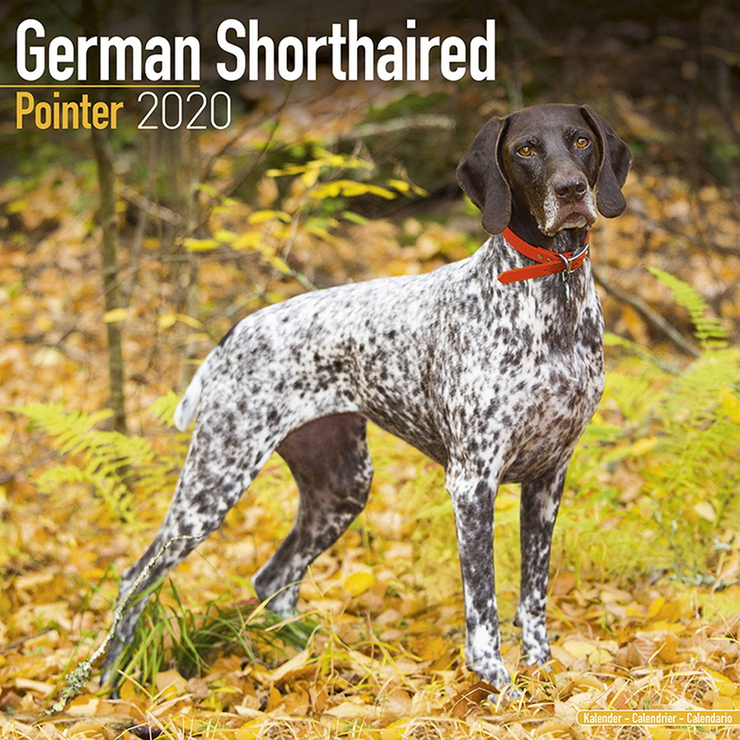 German Shorthair Pointer Wall Calendar 2020