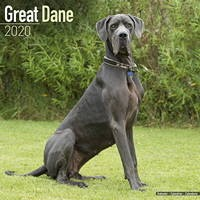 Great Dane (Euro) Wall Calendar 2020