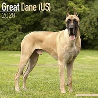 Great Dane (Us) Wall Calendar 2020