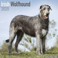 Irish Wolfhound Wall Calendar 2020