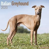 Italian Greyhound Wall Calendar 2020
