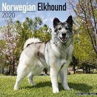 Norwegian Elkhound Wall Calendar 2020