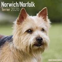 Norwich/Norfolk Terrier Wall Calendar 2020