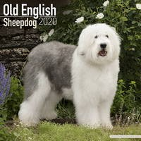Old English Sheepdog Wall Calendar 2020