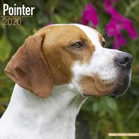 Pointer  Wall Calendar 2020