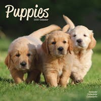 Puppies Wall Calendar 2020