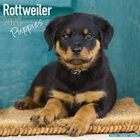 Rottweiler Puppies Wall Calendar 2020