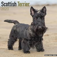 Scottish Terrier Wall Calendar 2020