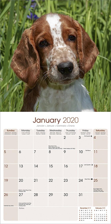 Welsh Springer Spaniel Calendar 2020 | Pet Prints Inc.