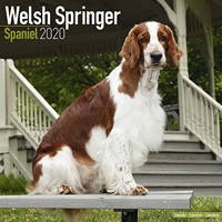 Welsh Springer Spaniel Wall Calendar 2020