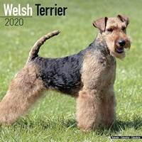 Welsh Terrier Wall Calendar 2020