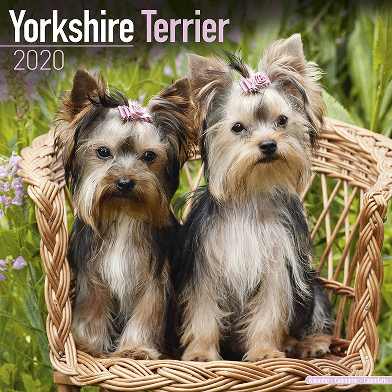 Yorkshire Terrier Wall Calendar 2020
