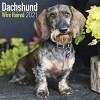 Dachshund (Wirehaired) Wall Calendar 2021