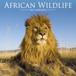 African Wildlife Wall Calendar 2021 by Avonside