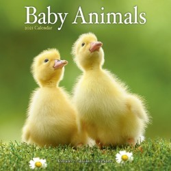Baby Animals Wall Calendar 2021 by Avonside