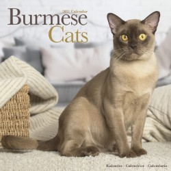 Cats - Burmese Wall Calendar 2021 by Avonside
