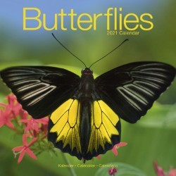 Butterflies Wall Calendar 2021 by Avonside
