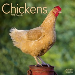 Chickens Wall Calendar 2021 by Avonside